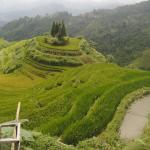Terrace field in Hoang Su Phi tour by Asia Top Travel