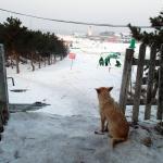 Photo de Beijing Nanshan Ski Village