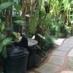 La Posada Private Jungle Bungalows Foto