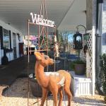Welcome Deer!