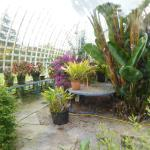 Inside the Victorian Greenhouse in the Walled Garden, but no entry