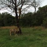 Photo de Zorgfontein Game Farm