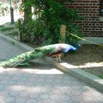 Foto de Staten Island Zoo