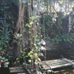 Moody Gardens Foto