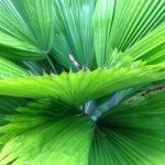 Beautiful fern