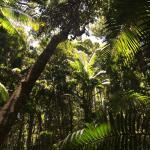 Fraser Island Adventure Tours Photo