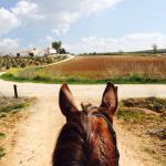 Foto de Hacienda Horses