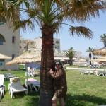 Novostar Palmyra Foto