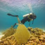 Foto de Wannadive Bonaire