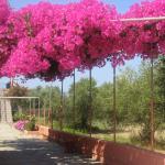 Λουλούδια Paradise