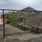 Foto di Porto Sandeman