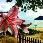 Traumhaft gelegen - Bungalows mitten im Wald, sehr schöner Strand, netter und freundlicher Servi