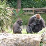 Foto di Safari Park