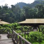 Borneo Rainforest Lodge Foto