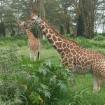 Photo de Lac Nakuru