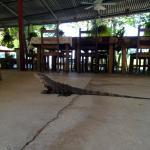 Photo de Rio Lindo Resort