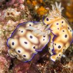 Two Fish Divers Lembeh Foto