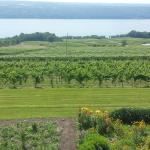 View of Seneca Lake from Damiani