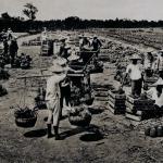 早期高雄港的駁二倉庫儲存輸出台灣的鳳梨。
