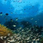 Marine Life's 2
