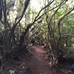 Middle Earth trees