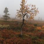 Pallas-Yllästunturi National Park Foto