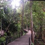 Foto de Abai Jungle Lodge