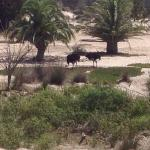 2 of the ostriches by the waterhole