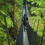 Foto de Oparara Kahurangi National Park Guided Tours