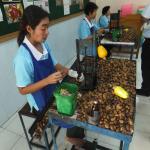Cashew nut processing.