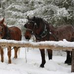 Happy Trails Horse Adventures Photo