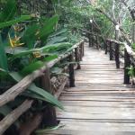 Photo de Tree Top Eco-Lodge