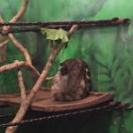 Aviarios del Caribe Sloth Sanctuary Foto