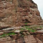 Photo de Les Bateliers de Perce