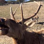 Foto di Fossil Rim Wildlife Center