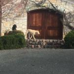 To the left of the parking lot, the tasting room & two lovely dogs greeting us :)