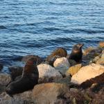 Kangaroo Island Odysseys Foto