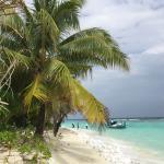 Coco Palm Dhuni Kolhu Foto