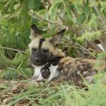 Foto de Hoedspruit Endangered Species Centre