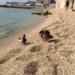Foto de Le Meridien Beach Plaza