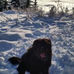 Lui im Schnee