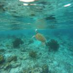 Woodwind Sailing & Guided Snorkel Foto