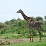 Full-Day Lake Manyara National Park Tour Foto