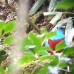 Foto de Monteverde Cloud Forest Biological Reserve