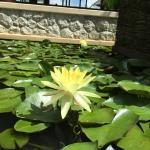 Andara Resort and Villas Foto