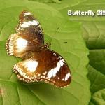 Photo de Butterfly Creek