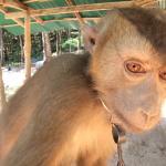 Lanta Monkey School Foto