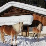 Reitstall Mateera im Winter