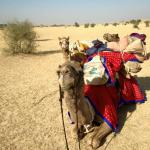 Trotters Independent Tours & Travels - Day Tours