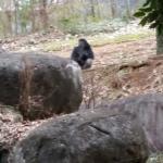 Foto de Zoo Atlanta